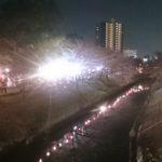 *桜祭り*船橋 海老川ジョギングロード